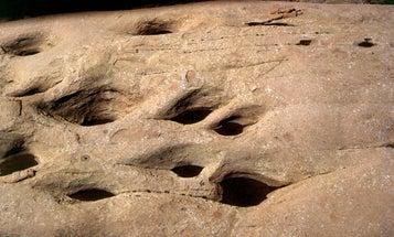 Paleontologists Question Dinosaur Tracks' Validity