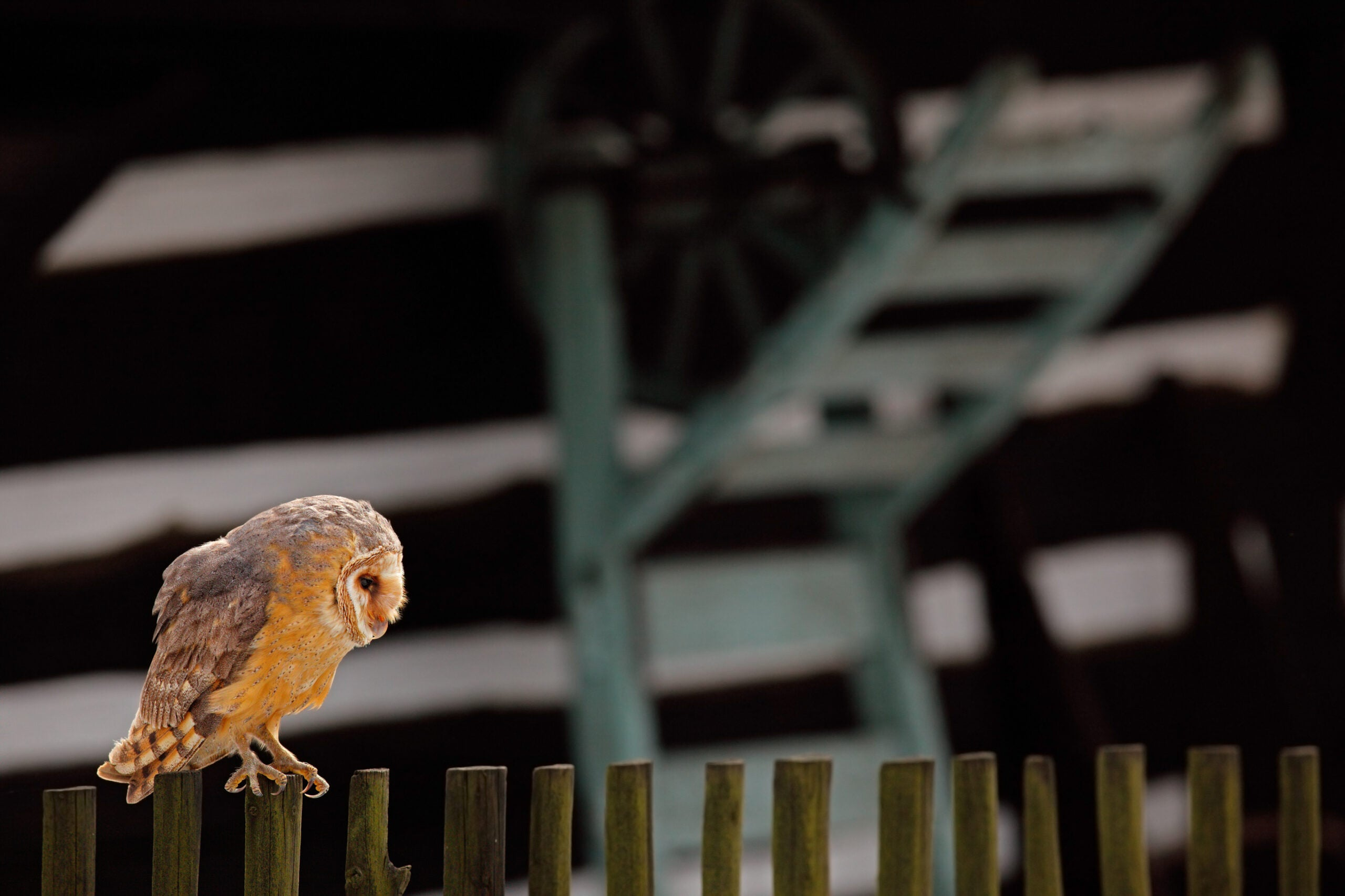 Wishing your city had more wildlife? Just look a little closer.