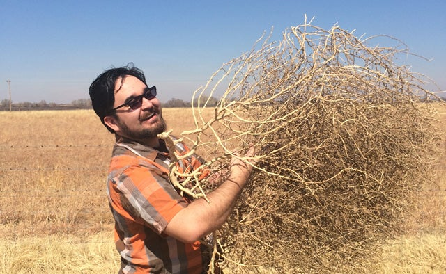Oh, the Lonesome, Woesome Tumbleweed