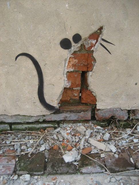 Rats' Neighborhood Pride Has Implications for Epidemic Control