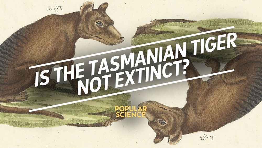 The search for the extinct Tasmanian tiger