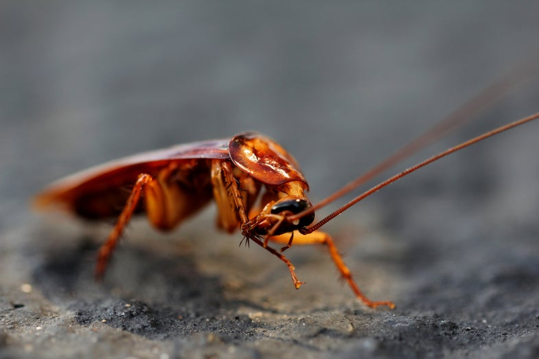 Hot, Humid Weather Makes Roaches Want To Fly