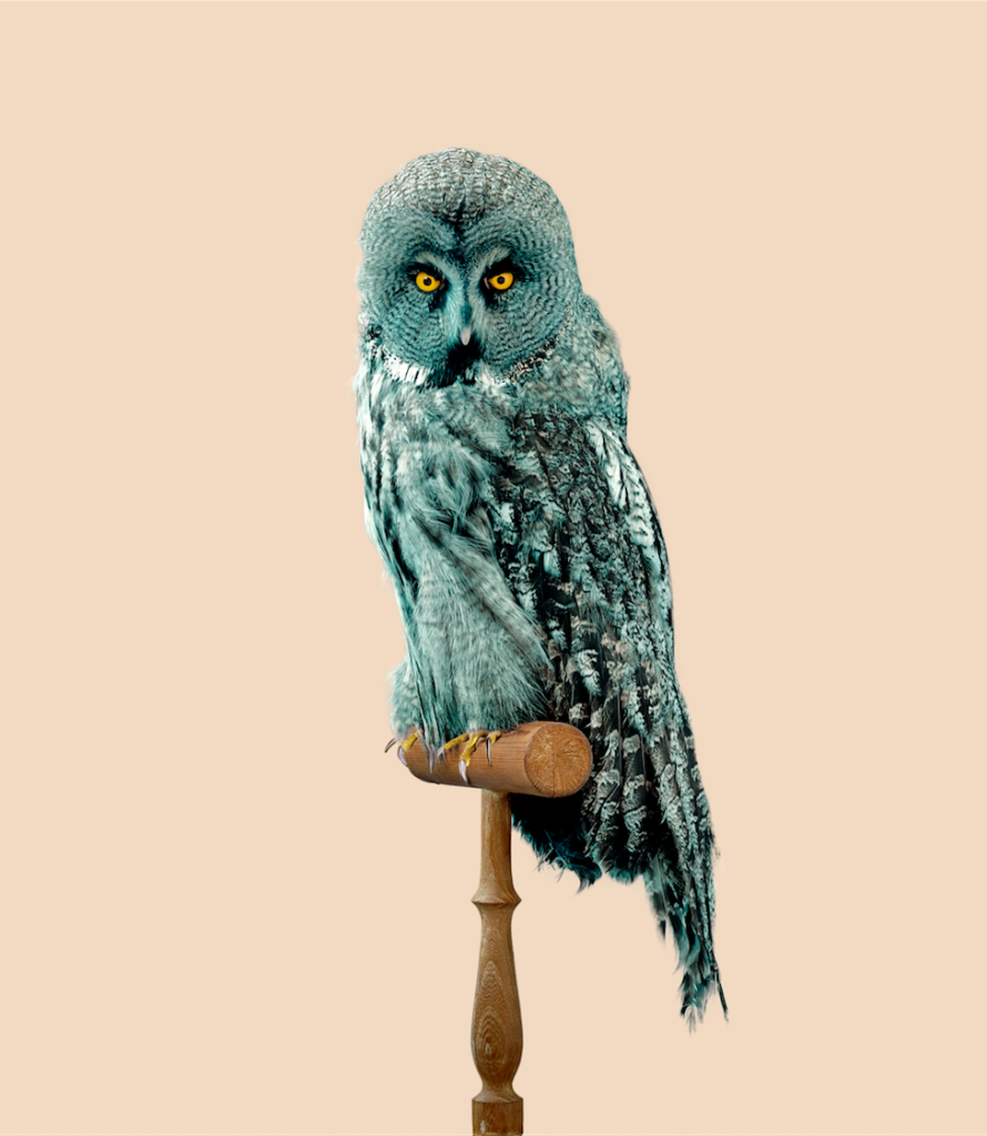 httpswww.popsci.comsitespopsci.comfilesimages201601fournier_great_grey_owl_strix_predatoris_with_predator-resistant_feathers_from_post_natural_history_image_courtesy_of_the_artist_0.png