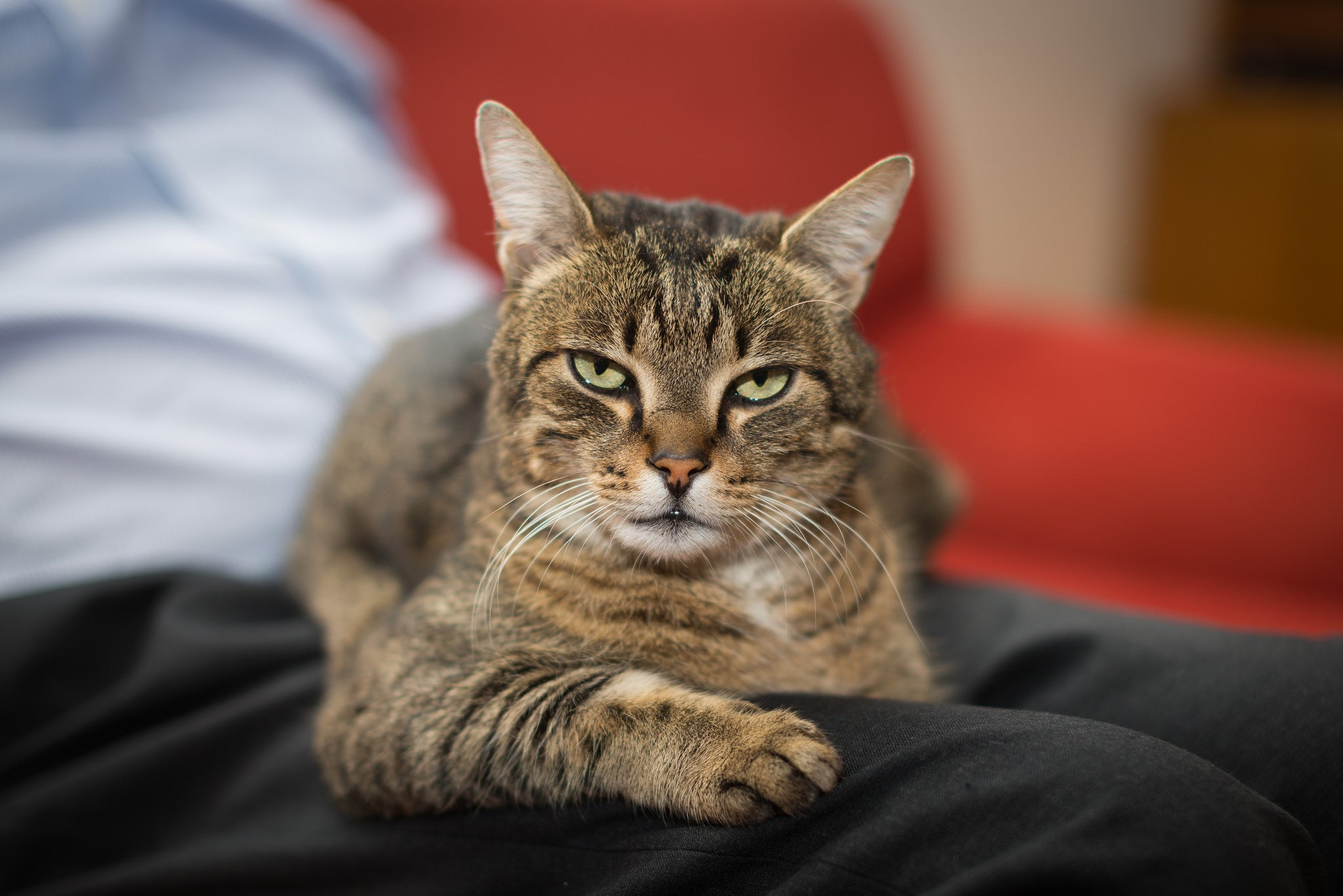 Cats May Understand Cause And Effect, Study Finds