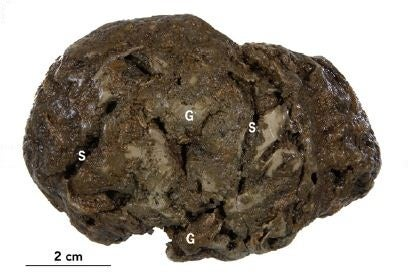 800-Year-Old Fossilized Brain Found Containing Intact Remnants of Brain Cells