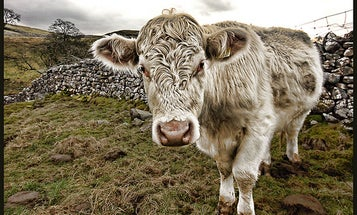A Load of Bull (for Halting Climate Change)