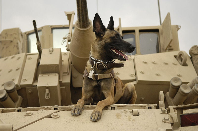 After $19 Billion Spent Over Six Years, Pentagon Realizes the Best Bomb Detector Is a Dog