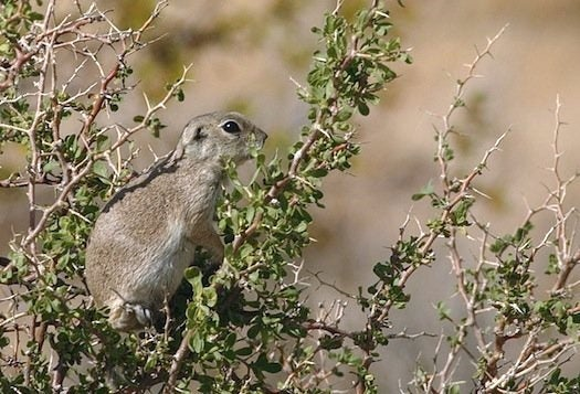U.S. Air Force Seeks Acoustic Squirrel-Detector