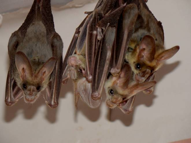 How Bats Recognize Friends In The Dark
