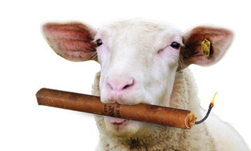 Sheep Help Scientists Clean Up Explosives Residue