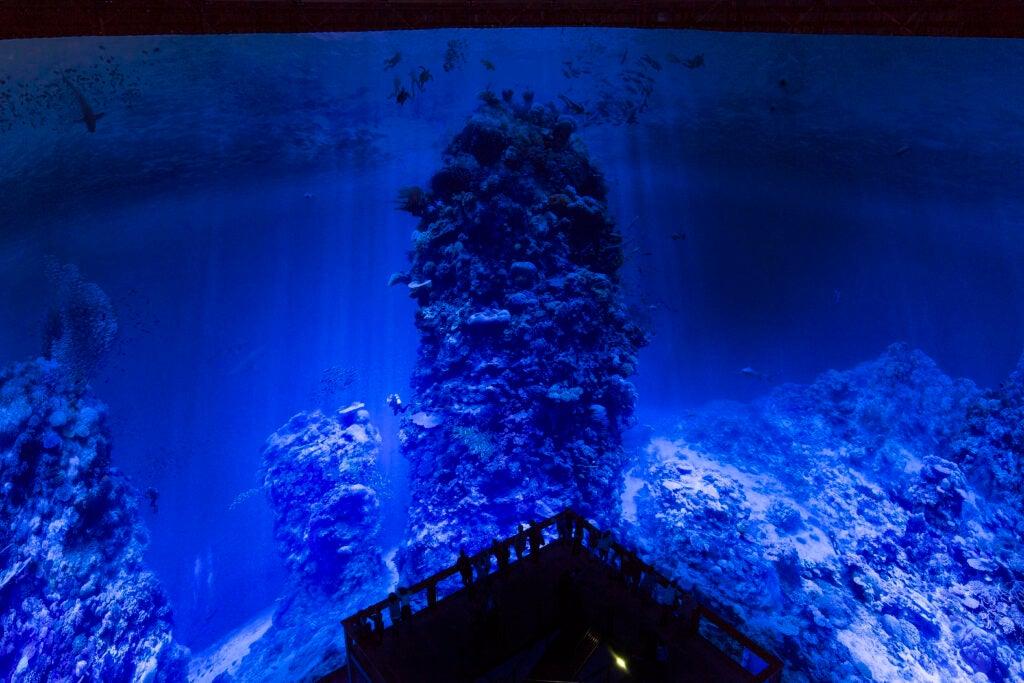 """""""Undersea"""