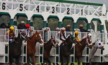 Speed Gene Separates Future Champions From Petting Zoo Ponies