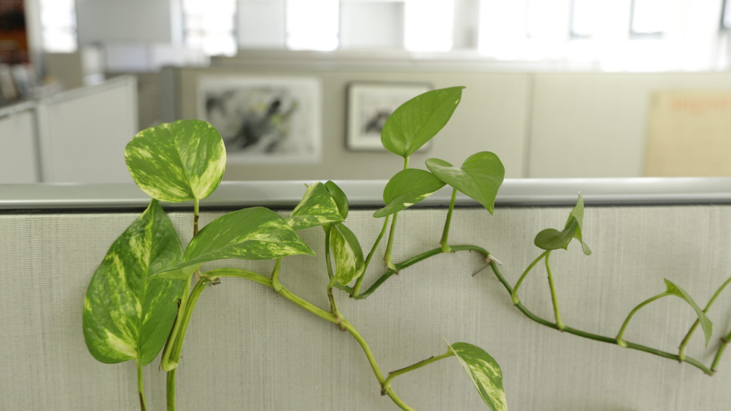 Indoor Plants Could Work As Cheap Air Filters For Offices