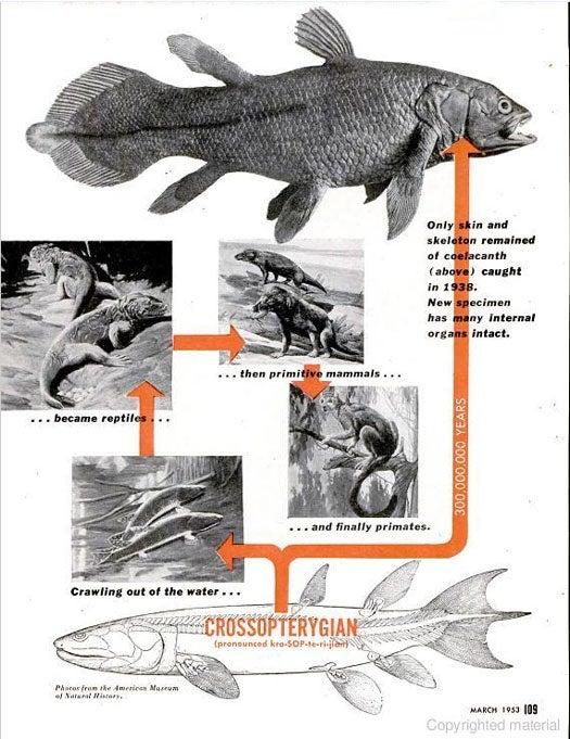 Fish That Evolution Forgot: October 1953