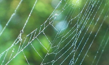 Newly Discovered Spider Silk Properties Are Soundly Promising