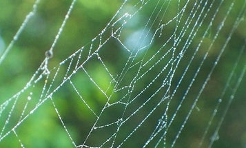 Computer Tracks Spider Species By Analyzing Webs