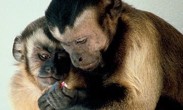 Experiment Creates Advertisements to Sell Food to Monkeys