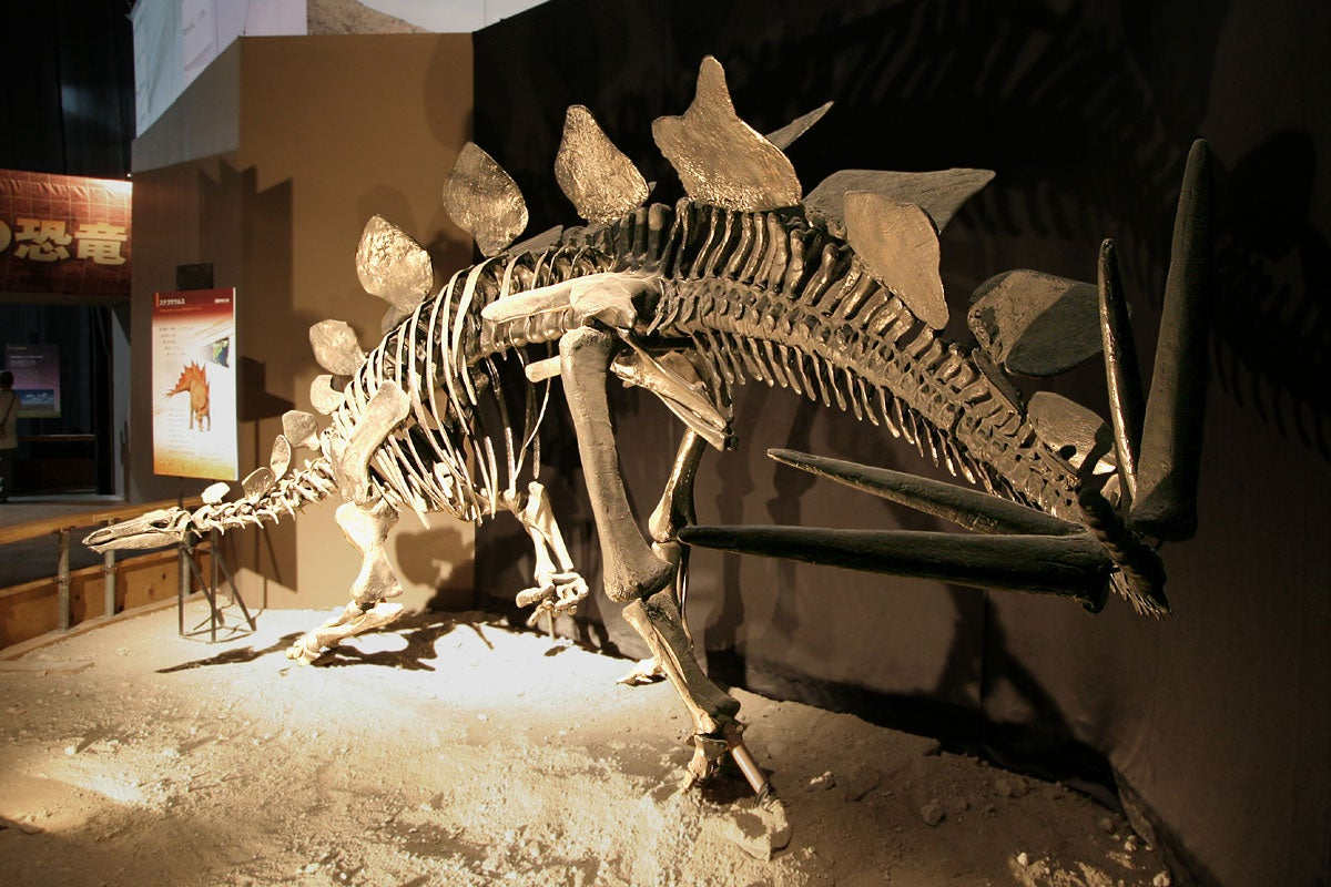 Stegosauruses Were Champion Fighters With Their Spiked Tails