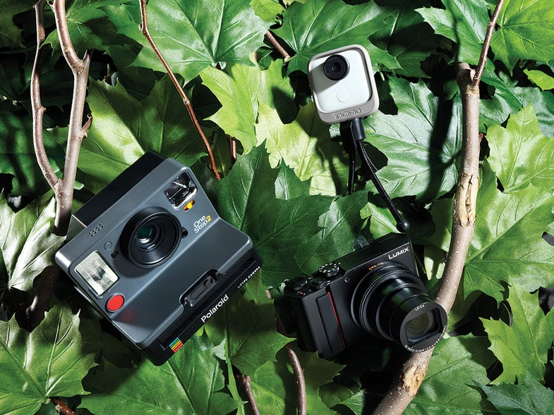 cameras in a tree