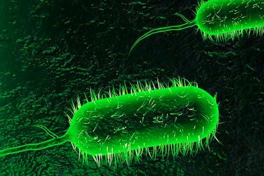 Do Natural Disasters Breed Health Epidemics?