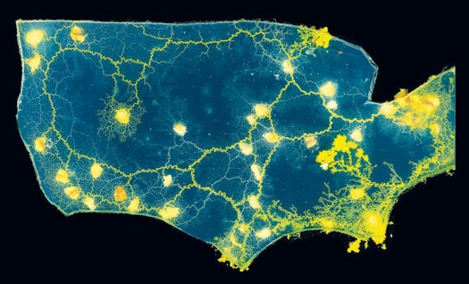 A Map of the US…Made of Slime Mold