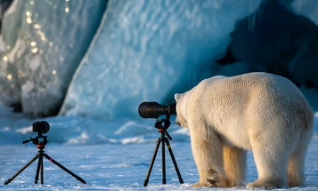 Our favorite finalists from the Comedy Wildlife Photography Awards