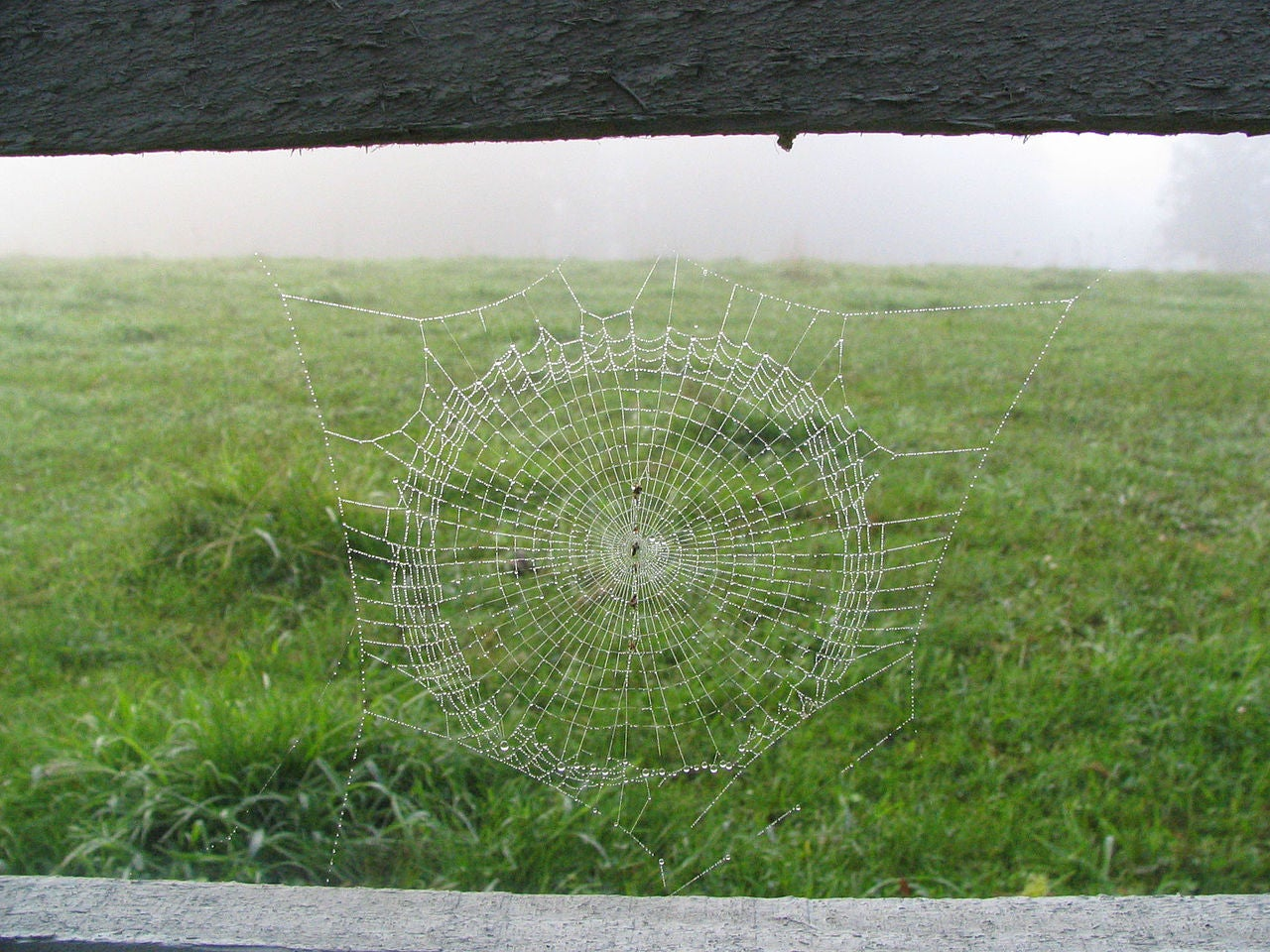How Spiders Spin Their Silk, and Why It Can Help Humans