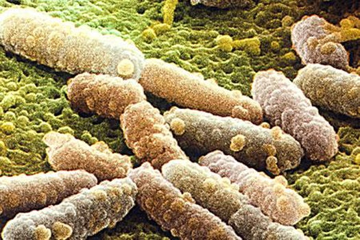 Promising New Class of Antibiotics Causes Bacteria to Commit Suicide