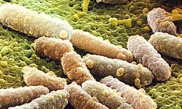 Promising New Class of Antibiotics Causes Bacteria to Commit Suicide