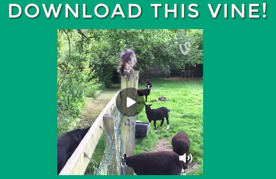How to download a Vine