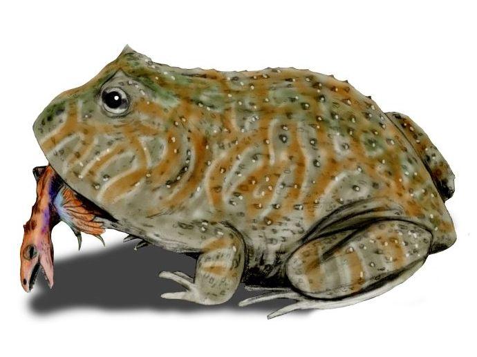 beelzebufo illustration