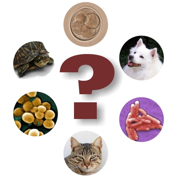 Putting The Pet Pathogen Paradox Into Perspective
