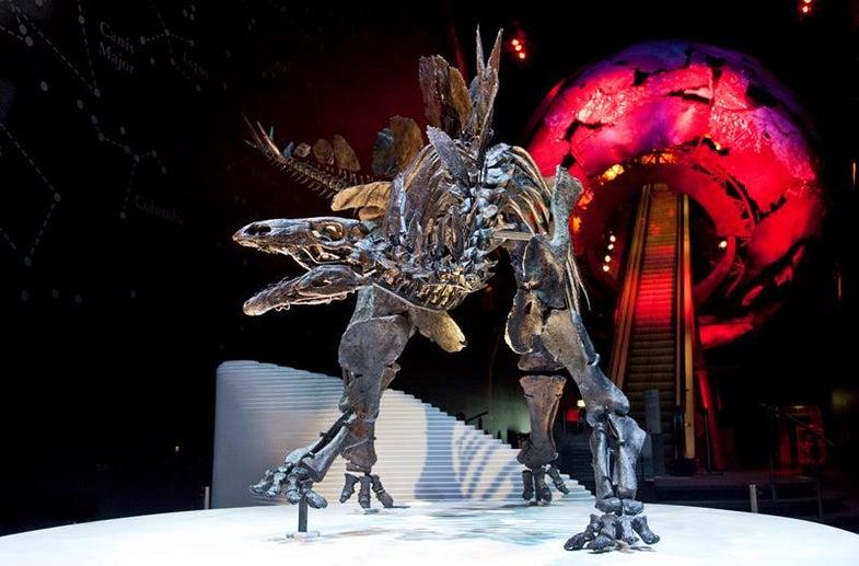 Watch A Stegosaurus Skeleton Get Reassembled