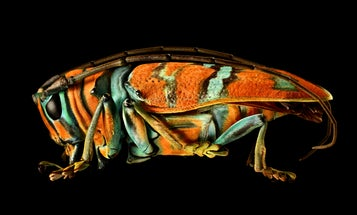 These are the most beautiful pictures of bugs you will ever see