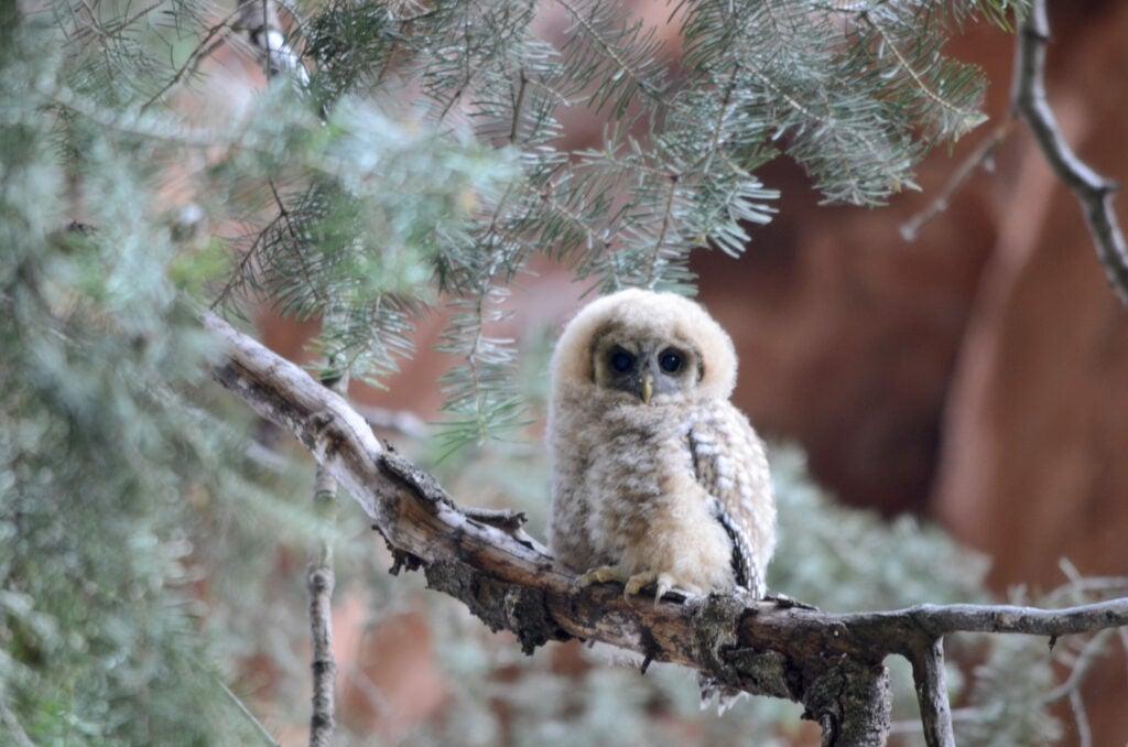 """Owlet"""