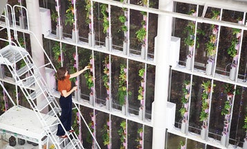 You Built What?!: A Vertical Veggie Farm