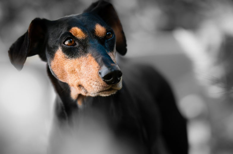Yes, your dog is making puppy eyes at you