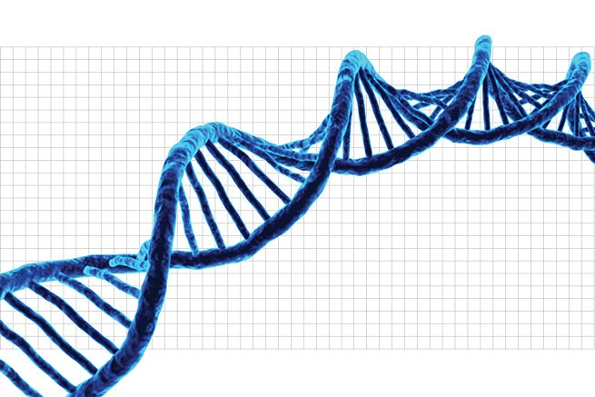 synthetic genomics