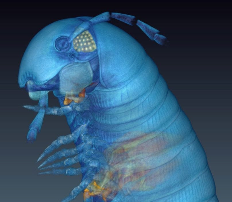 Scanning Tech Sees Inside Insects To Catalogue New Species