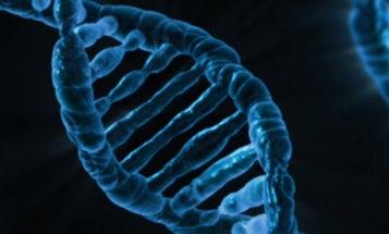 Gene Editing Shifts Food Possibilities Forward