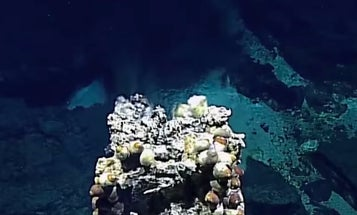 Scientists Freak Out Over Newly Discovered Hydrothermal Vents