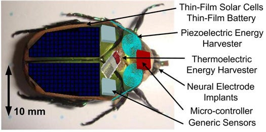 Cyborg Insects Could Be First Responders in Rescue Situations