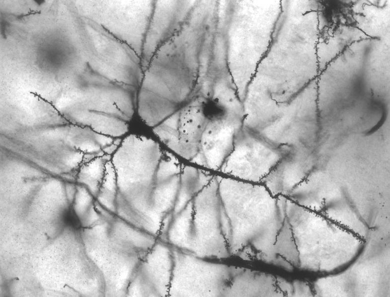 The Popular Science Guide To Neuroscience