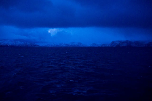 How polar animals cope with frigid darkness for months at a time