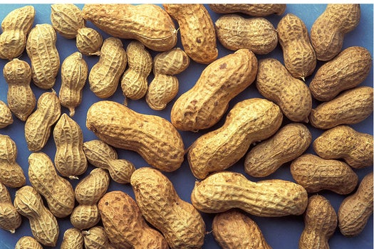 Potential Cure For Peanut Allergy Successful In Test