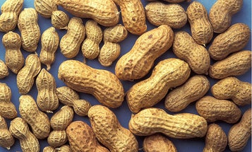 Study Finds A Daily Dose Of Peanuts Under Your Tongue Helps Treat Peanut Allergies
