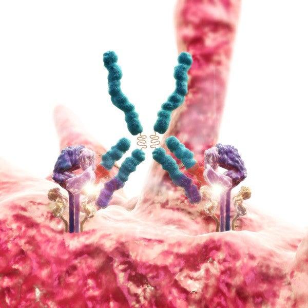 Google Contributes Massive Amounts of Computing Power to Engineer Antibodies
