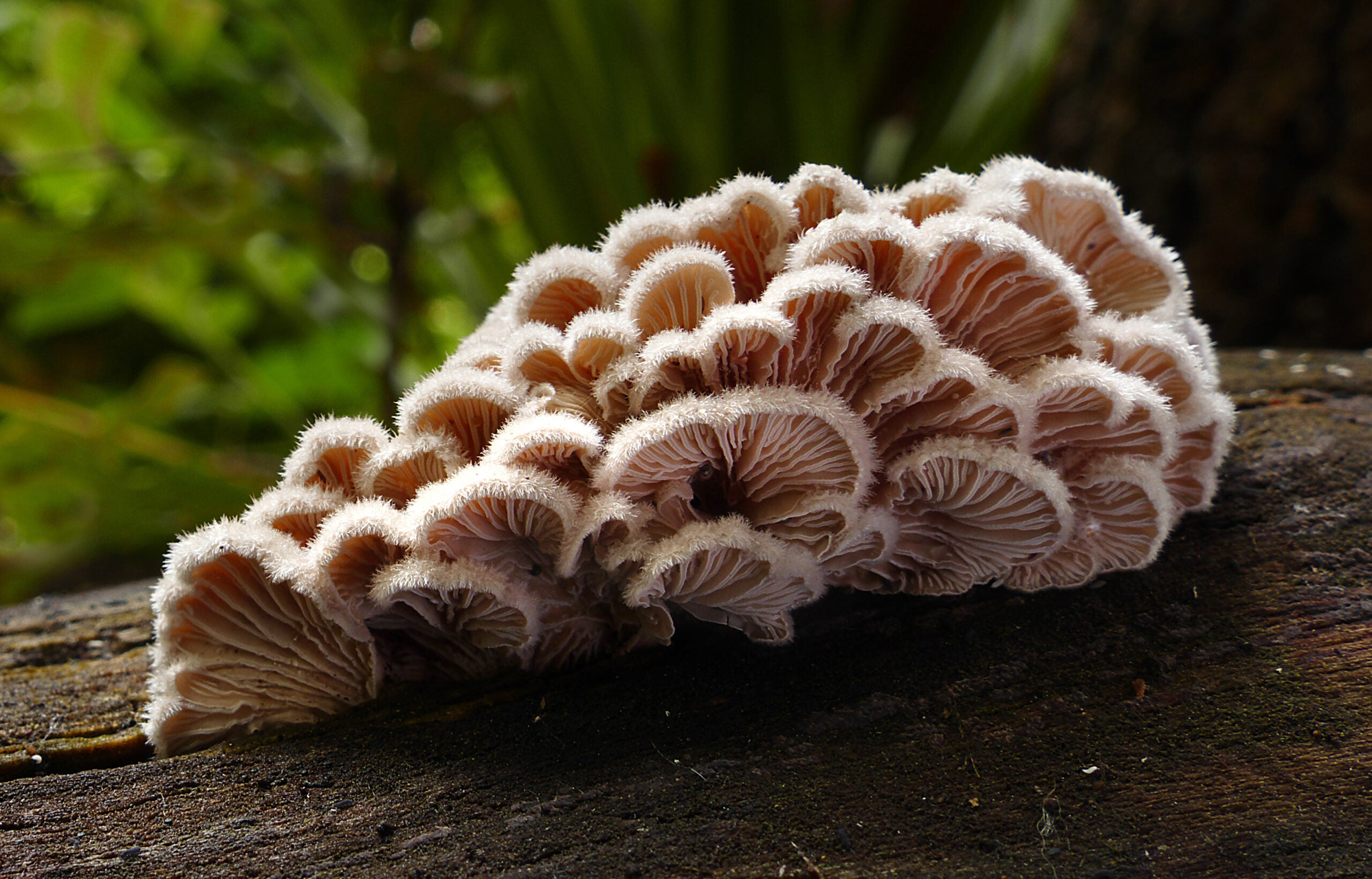 This fungus has over 23,000 sexes and no qualms about it