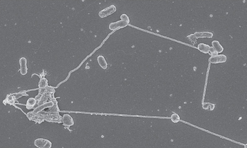 Bacteria Pipe Food To Each Other Using Tiny Tubes