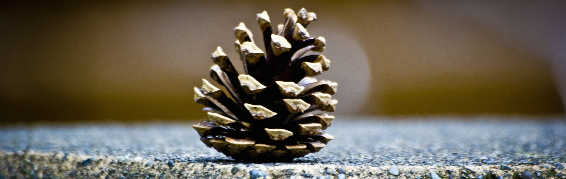 Pinecones could help make buildings more energy efficient